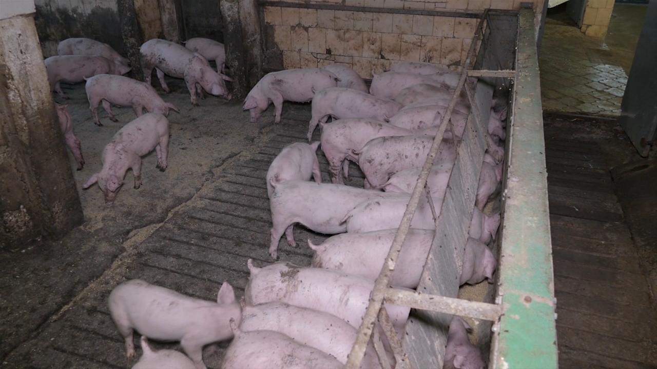 Farma koja ispunjava najviše standarde