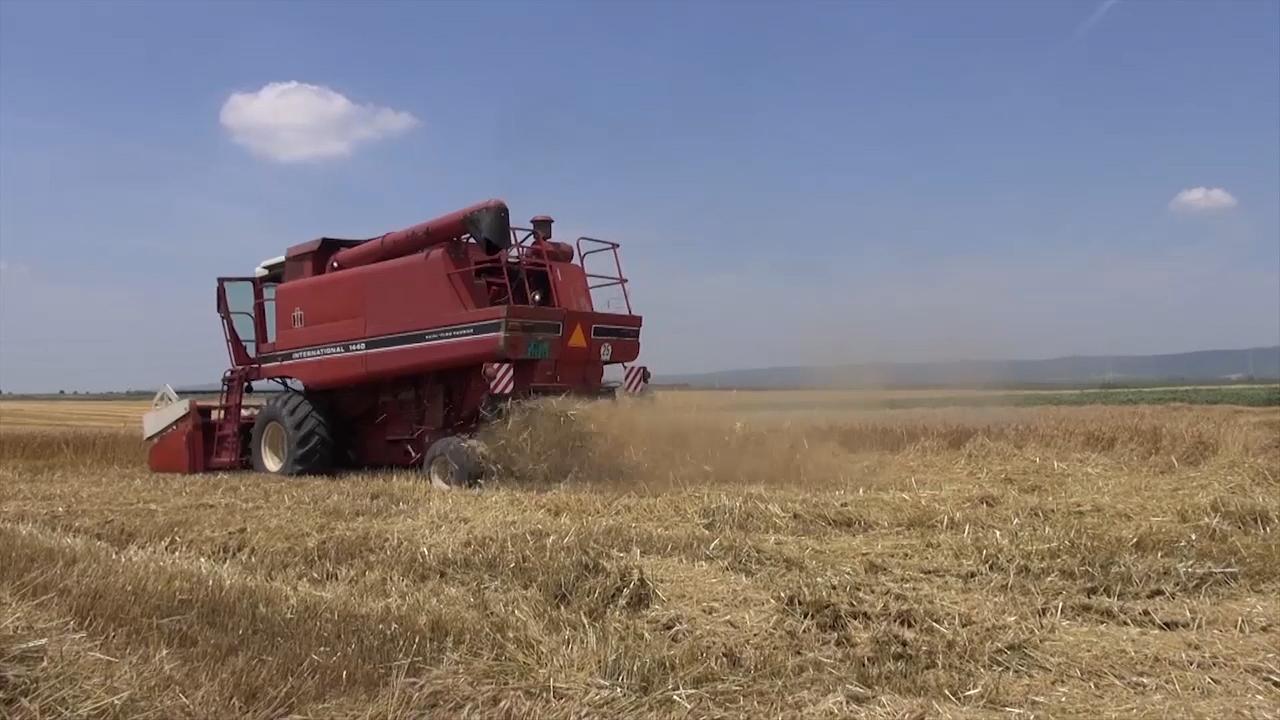 Još se sabira rod pšenice