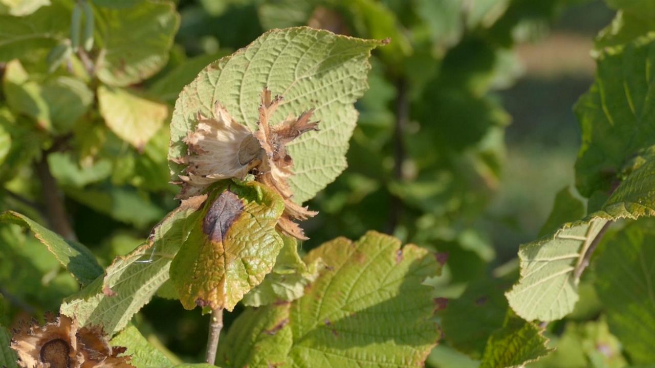Najisplativija proizvodnja borovnice, jabuke, jagode, maline i trešnje