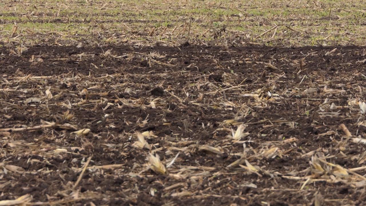 Primećen porast upotrebe nedeklarisanog semena pšenice