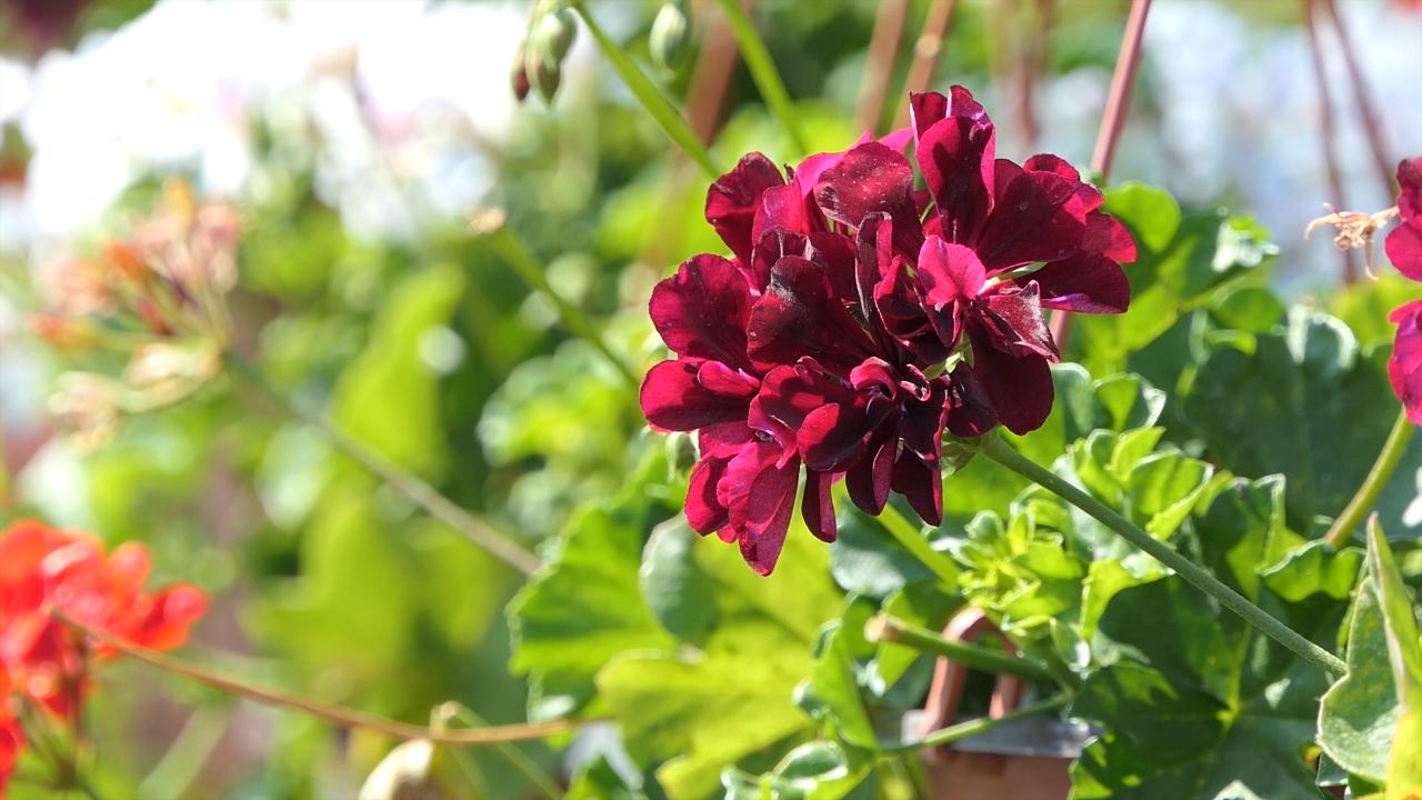 Cvećarstvo samo deluje kao lagan posao
