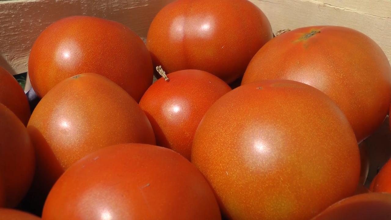 Povrće prodaje u sopstvenoj piljari