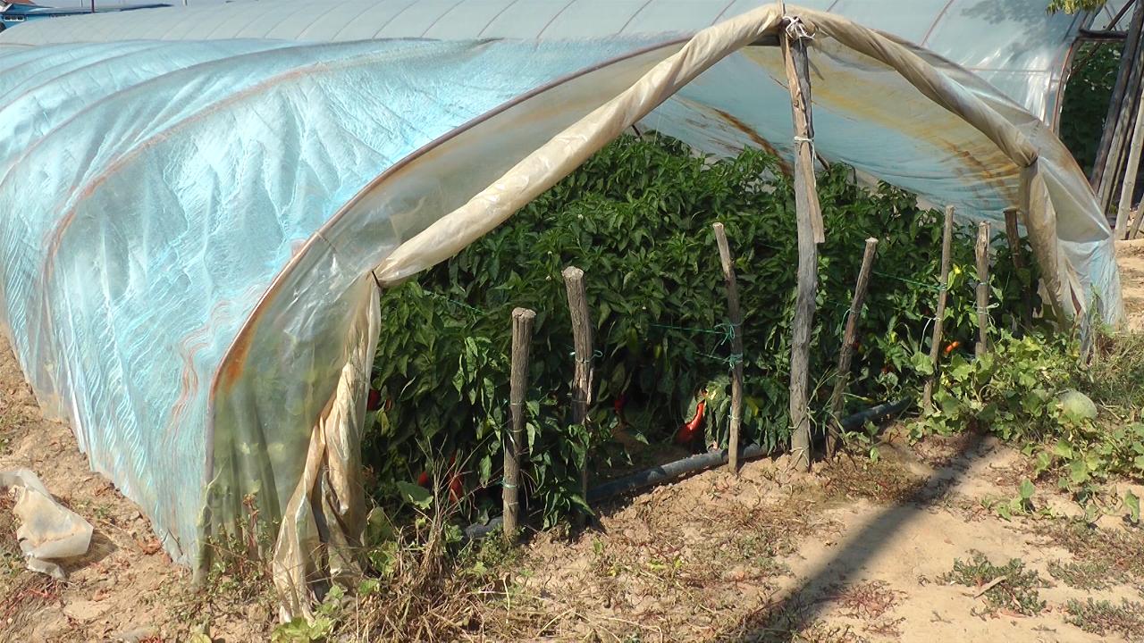Ulaganja u poljoprivredu u Vlasotincu sve veća