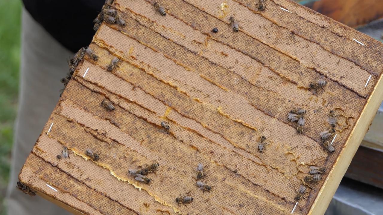 U ovoj sezoni najisplativiji bagremov med