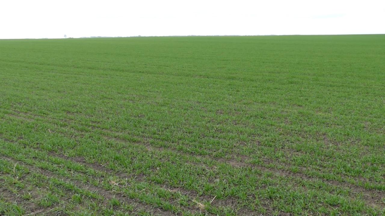 U zakasneloj setvi, ratari povećali količinu semena