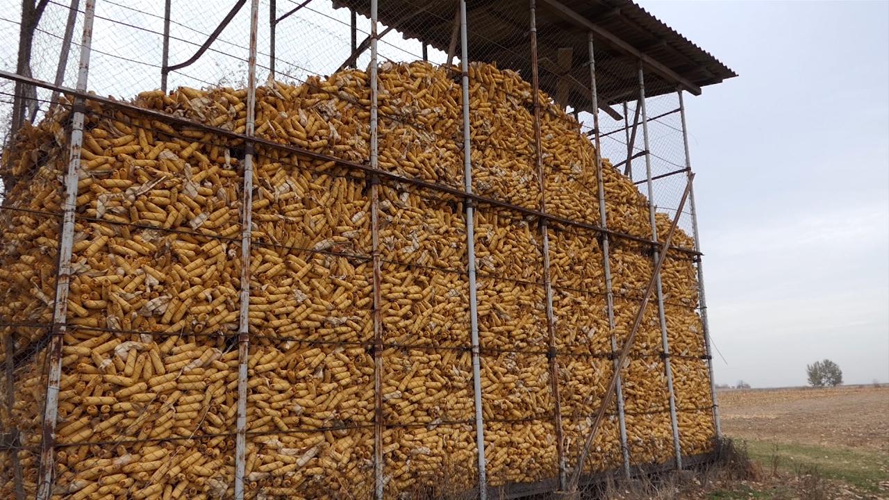 Otkup kukuruza domaćeg porekla