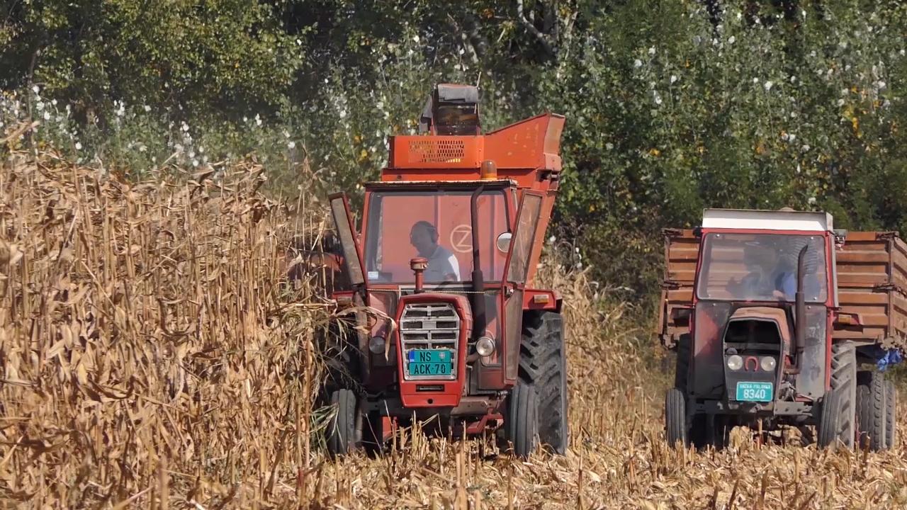 Cena kukuruza pada,  soja beleži pozitivne trendove