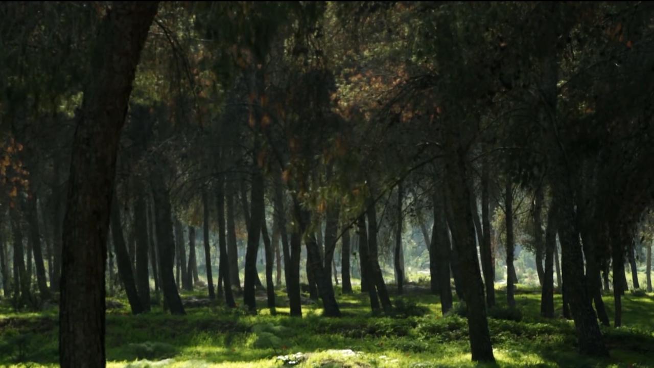 Pošumljavanje i ozelenjavanje životne sredine