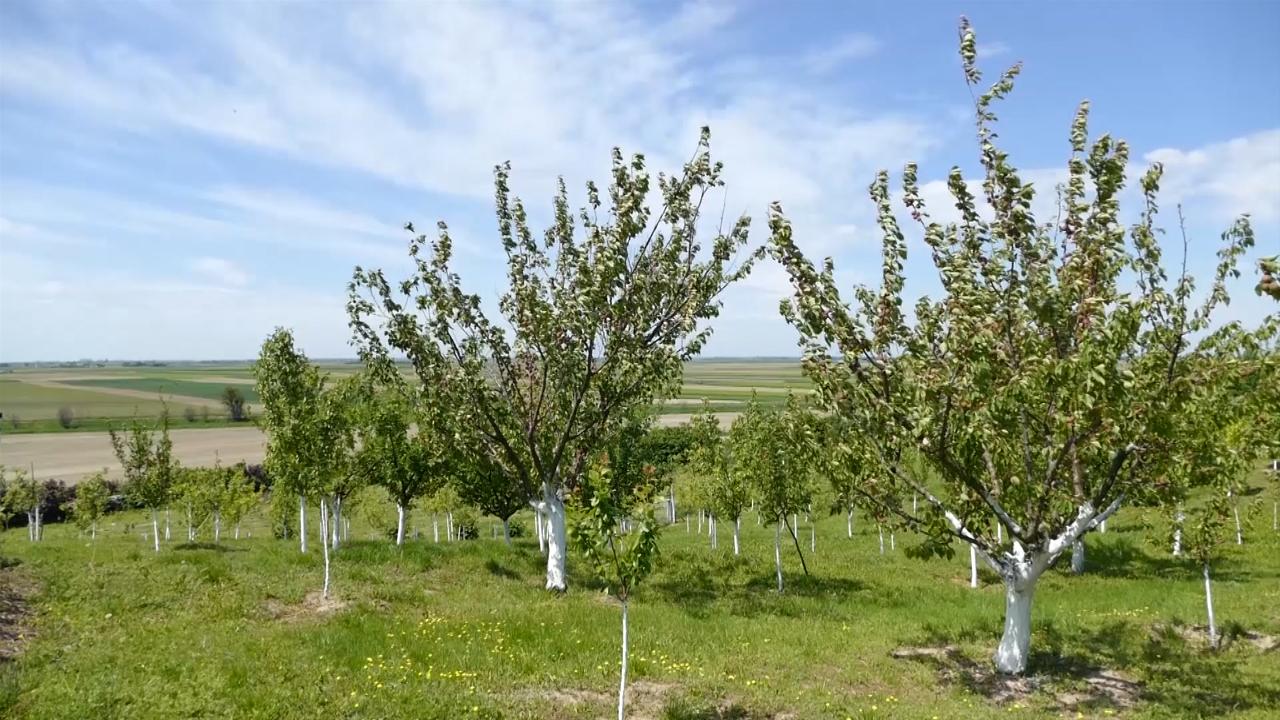 Na zaparloženoj zemlji najčešće niču voćnjaci i vinogradi