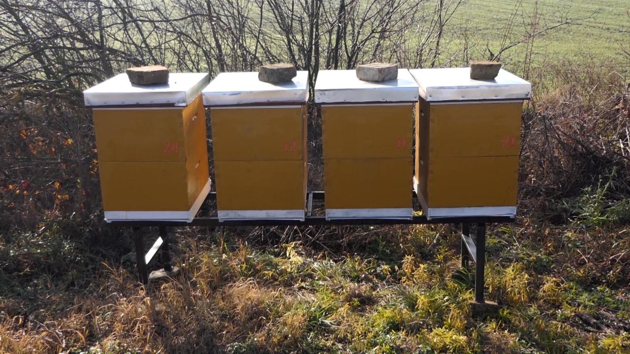 U slučaju uginuća pčela, Kikinda poklanja nove rojeve