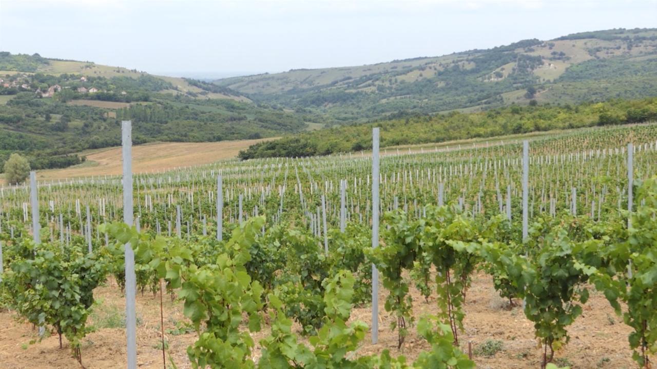 U vinogradarskom registru je oko 7.000 hektara