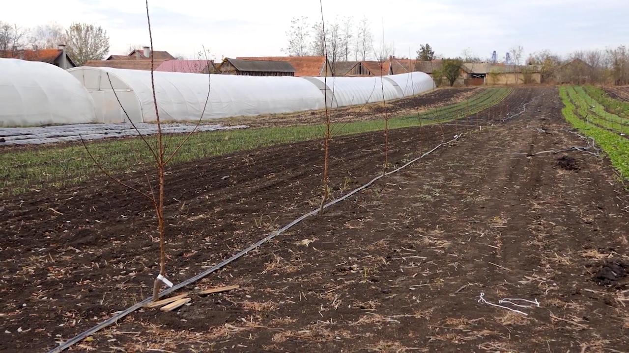 Nastavljen rast površine pod organskom proizvodnjom