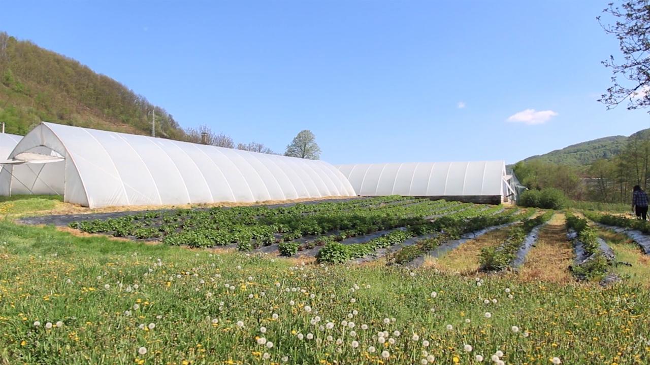 Država će  finansirati prelazak sa konvencionalne na organsku proizvodnju