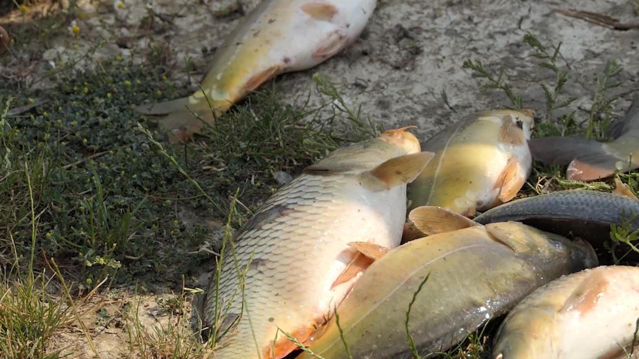 Proizvođači konzumne ribe suočeni sa neizvesnošću