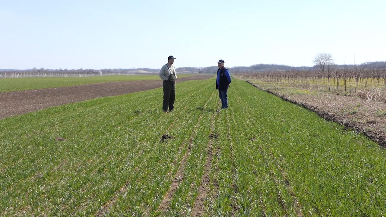 Pšenica se izborila, priprema se setva kukuruza