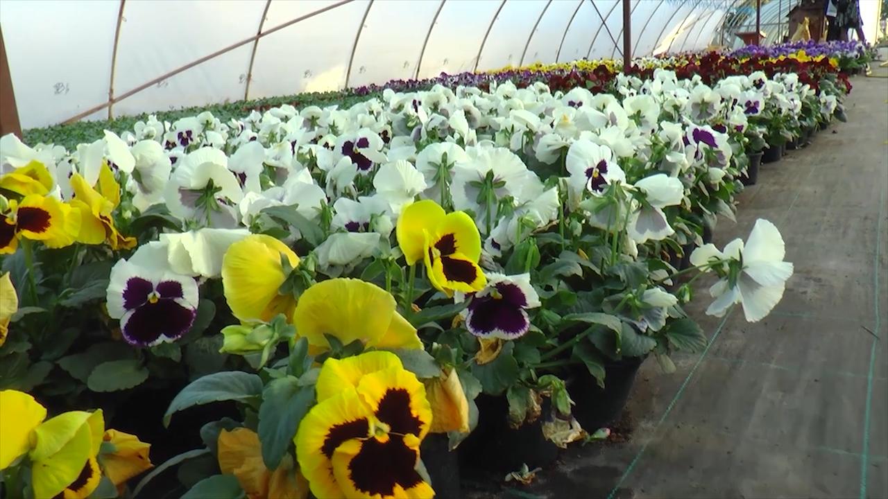 Tri generacije uključene u proizvodnju cveća