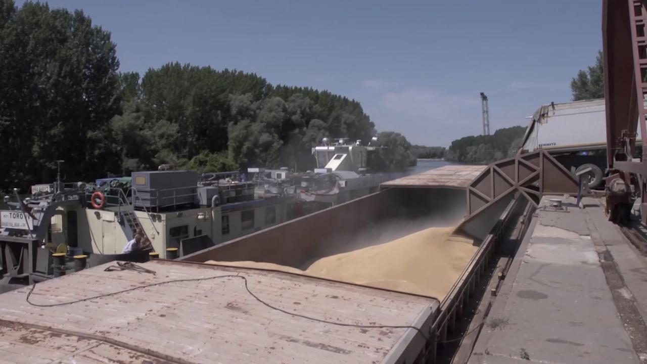 Slaba tražnja kukuruza, uljane repice i soje