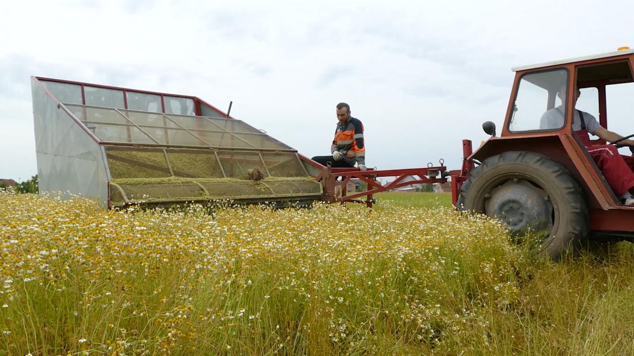 Pogodan teren za uzgoj