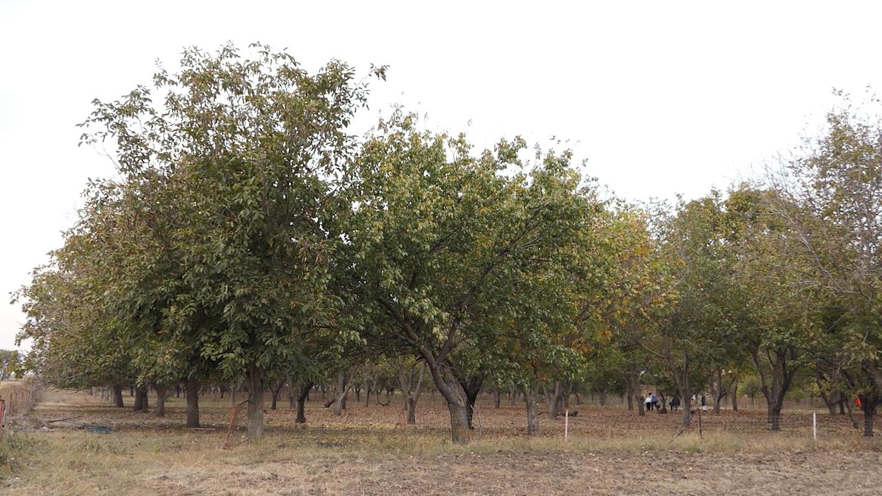 Proizvođači na samom početku skupljanja plodova