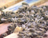Bez dogovora o zaštiti pčela