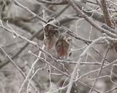Mraz pričinio štetu na voćkama