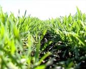 Sledljivost u poljoprivredi