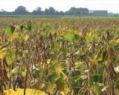Zabrana GMO proizvoda