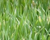 Agrosavet za 10. april