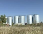 Intervencija na tržištu pšenice