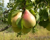 Vlada Vojvodine će podsticati voćarsku proizvodnju