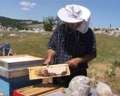 Moguć izvoz meda iz BiH u EU