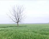 Malverzacije sa zemljištem