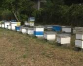 Zaštita pčela