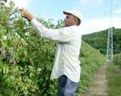Manje zaposlenih u agraru