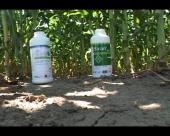 Zaštita useva kukuruza