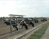 PKB gradi još jednu farmu, investicija 10 miliona evra