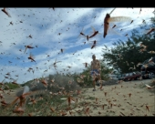 Uzgoj insekata