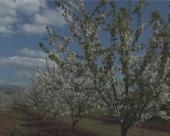 U Donjem Matejevcu niču novi zasadi voća