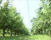 Zaštita jabuka