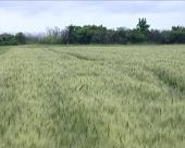 Sombor: Hektar i do 14.000 evra