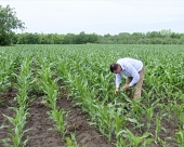 Zaštita od kukuruznog plamenca