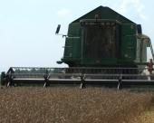 Realna cena pšenice