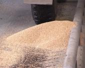Predlog za otkup pšenice