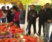 Paradajzijada u Batušincu