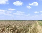 Zašto poljoprivrednici imaju straže