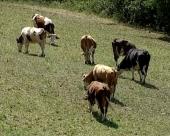 Podrška stočarima