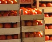 Loš kvalitet paradajza