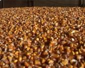 Rekordan rod kukuruza obara cenu mesa?