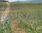 Unapređenje vinogradarstva
