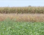 Dan polja u Kikindi